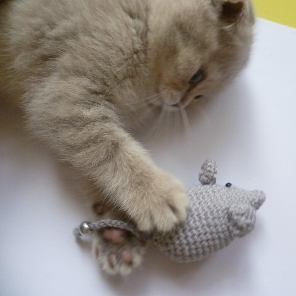 кот играет с вязанной мышкой